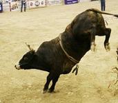 Bull Rider Fatally Injured At Kansas County Rodeo