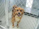Dogs Quarantined At Junction City Animal Shelter