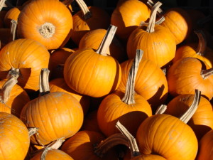 Sheriff: Reward offered after pumpkin theft in Jewell Co.