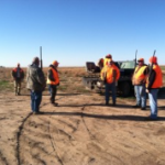 Mixed reviews on pheasant numbers in Central Kansas