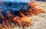 fire  grass fire