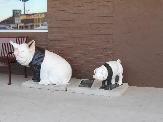 10-29 Missing Pig