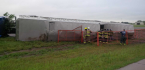Cattle rounded up after truck overturns on Kansas highway  UPDATE