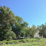 KU's Prairie Acre (Photo by Chuck France / University Relations)