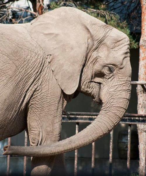 Garden City Zoo's Elephants Moving To Colorado