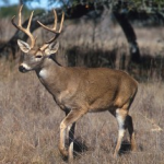 Kansas deer hunt offers disabled hunters access to outdoors