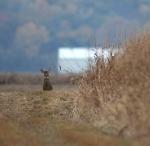 2015 marks 50 years of deer hunting in Kansas
