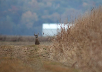 2015 marks 50 years of deer hunting in Kansas