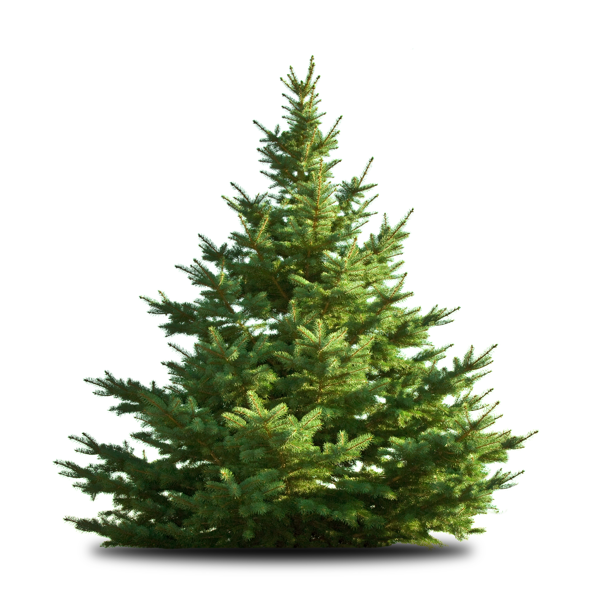 City Offers Christmas Tree Recycling