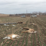 Kan. Game Warden: Deer killed by downed power lines