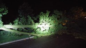 Thunderstorm Winds Topple Trees in Salina