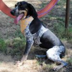 Featured pets at the Salina Animal Shelter