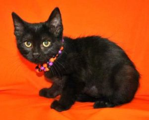 New Arrivals for Adoption at the Salina Animal Shelter