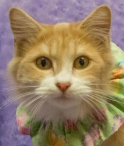 """Cats are connoisseurs of comfort."" ~ James Herriot"