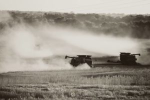 Report: Kansas wheat harvest on track this year