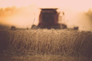 Researchers using math to boost wheat straw use for ethanol