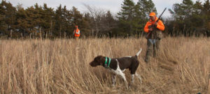 Pheasant and quail season opens Saturday