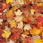 Annual Curbside Leaf Collection to Begin