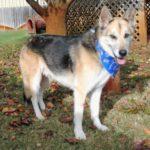 New November Adoptable Pets!