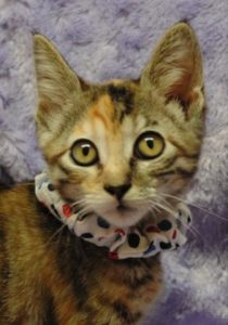New Pets Up for Adoption at the Salina Animal Shelter
