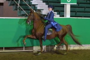 Salina Charity Horse Show To Benefit BBBS