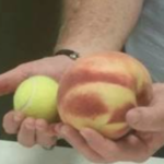 Kansas orchard awaits word of possible world record peach