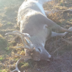 Game Wardens ask for help to locate those poaching deer