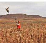 2017 Kansas upland bird hunting forecast available