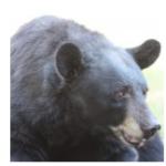 Kansas zoo mourning the death of popular black bear