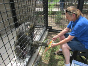Famous mandrill artist dies at zoo