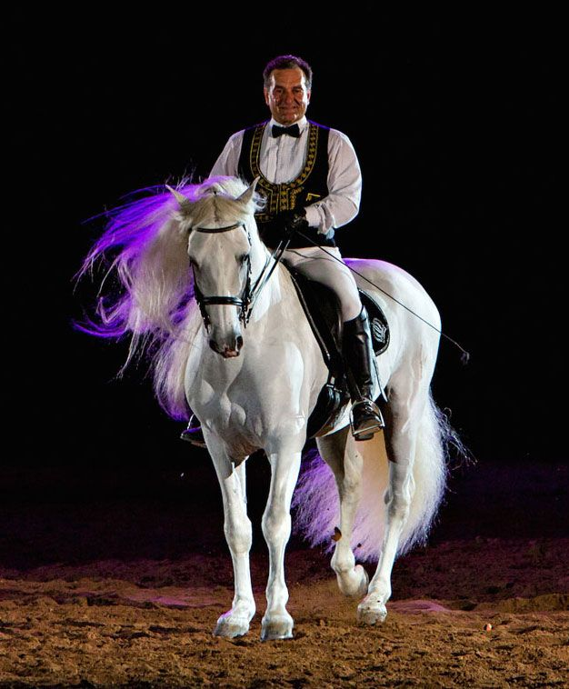 'Gala Of The Royal Horses' Schedules Stop In Salina